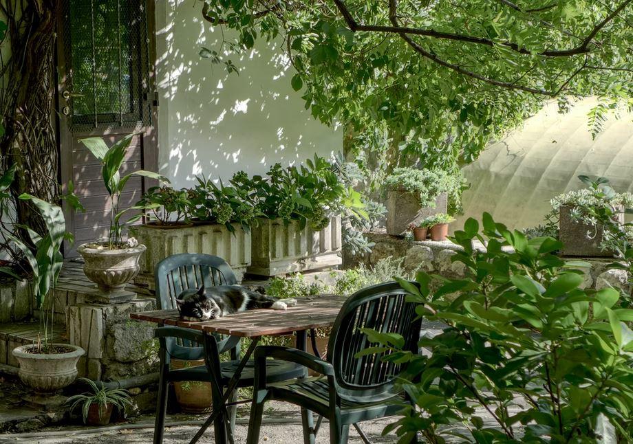 chat table de jardin